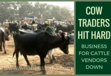 Cow traders hit hard at Asia's largest Sonpur cattle fair