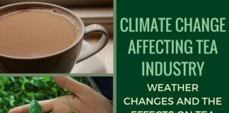 Climate change brews multi-challenges for tea (Dec 15 is International Tea Day)