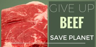 Give up Beef and save the Planet