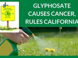 Glyphosate causes cancer, rules California