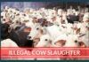 Cow Slaughter in Bengaluru