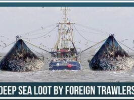 Deep Sea Loot by foreign trawlers